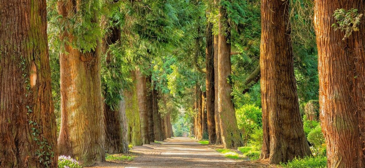 Allee_Wald