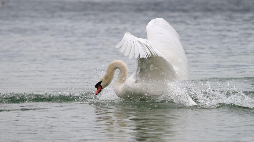 swan_Fligvorbereitung