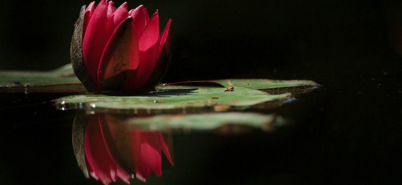 flowers-3574709_1280