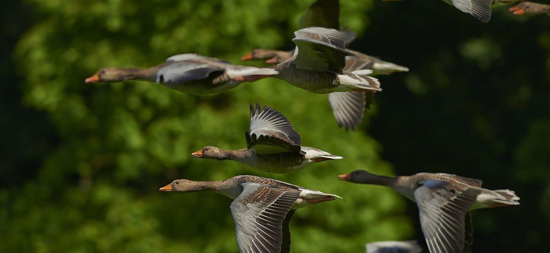 flock-of-birds-350290_1920