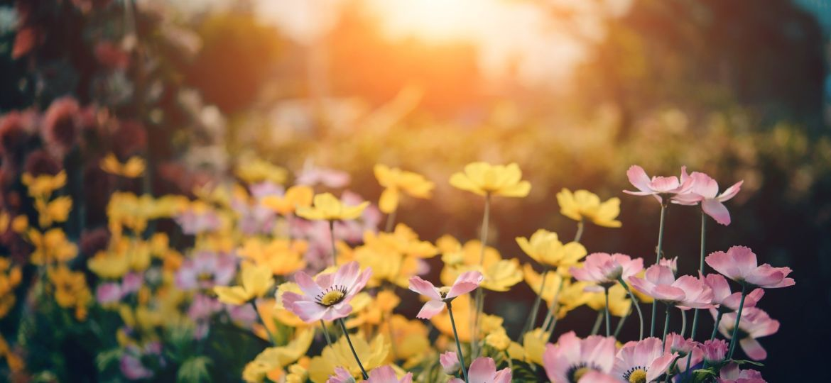 sunrise_flowers