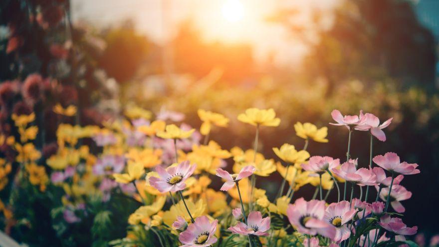 sunrise_flowers