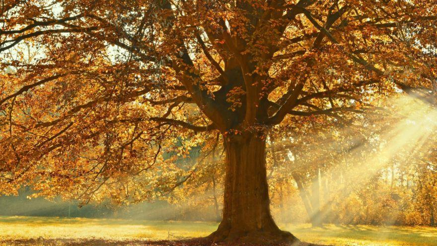 Baum Herbst