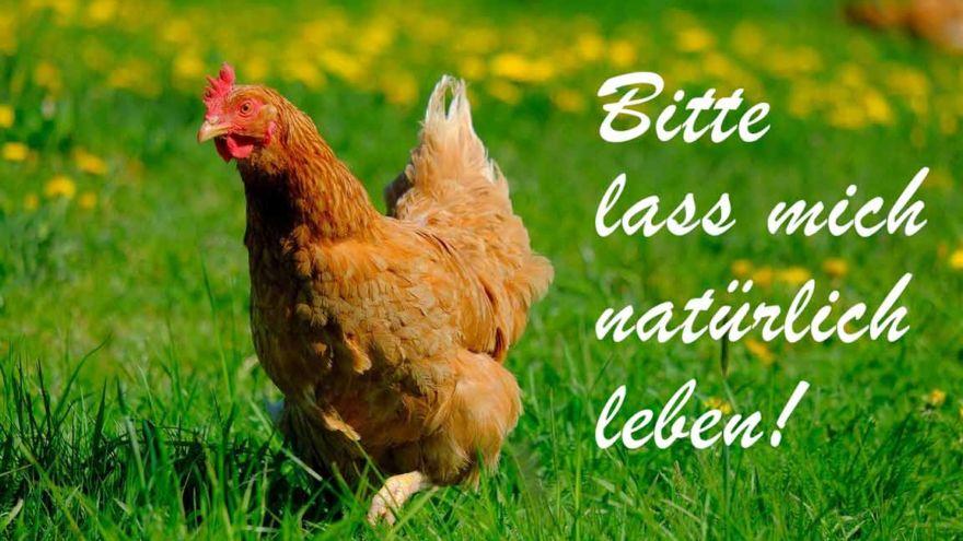 chicken-schreibschrift