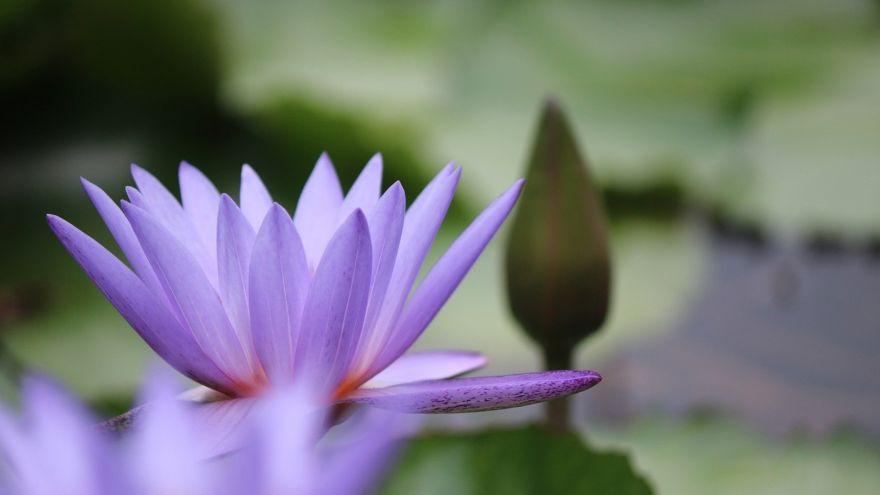 flower-5538547_1280