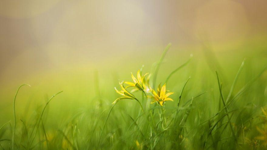 grass-3085457_1280