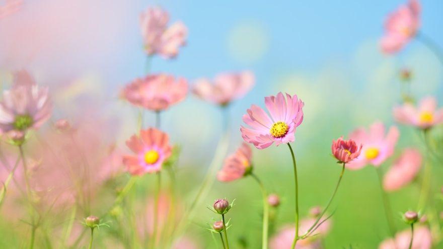 plant-2837468_1280